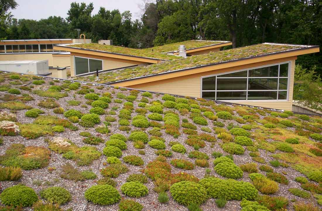 Green Roof - Living Roof