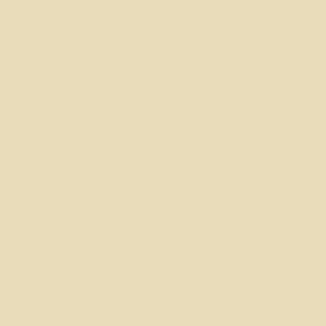 Sesame - Natural Wall Paint Colour - The Organic and Natural Paint Company