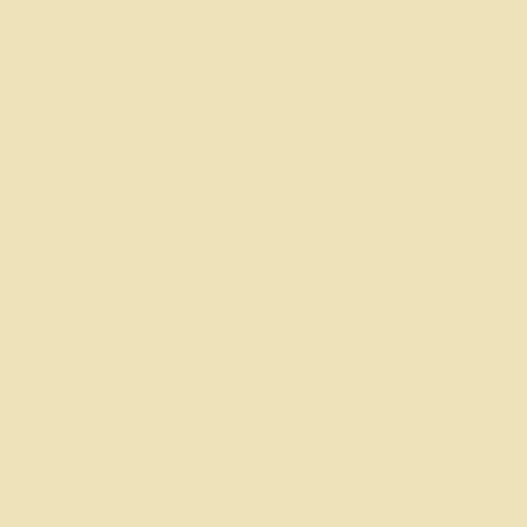 Wheat Berry - Natural Wall Paint Colour - The Organic and Natural Paint Company